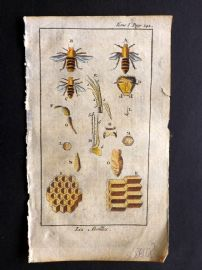 Pluche 1756 Hand Col Print. Bees, Insects